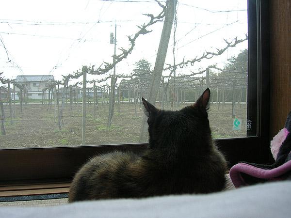 blog20110515_09.jpg
