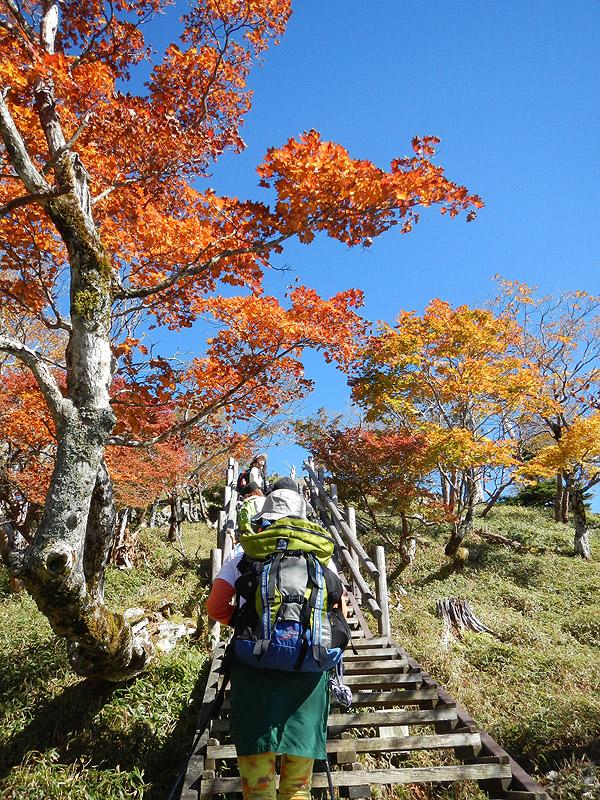 頂上に続く木道階段